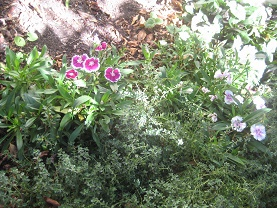 Boslers flowerscomp