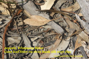 Wimmera River bank soil