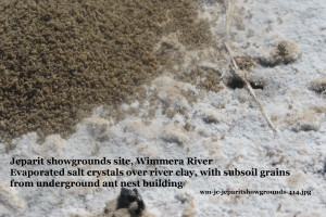 Salty soil crust Wimmera River