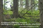 Dk-jc-silkeborg-useforest-090
