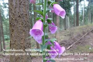 Dk-jc-silkeborg-useforest-130